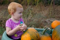 Charlie with Pumpkins