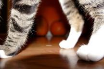 Kitty Photobomb