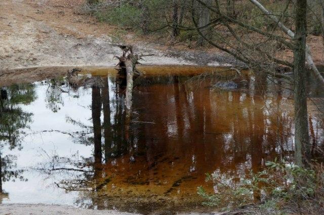 Cedar Water