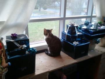 Kitten McNugget