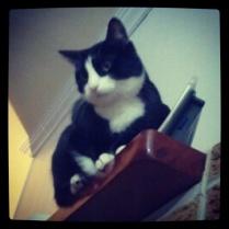 Mantle Cat