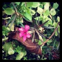 Early Flower