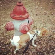 Cliche Dog