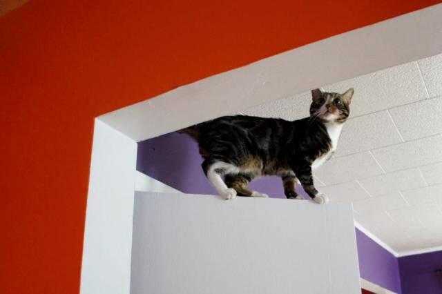 Kitten McNugger