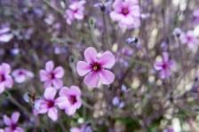 Light Purple Flowers