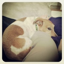 Cuddle Puppy