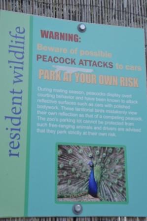 Peacock Attacks