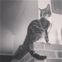 Fireplace Kitty