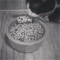 Toy in Food Bowl