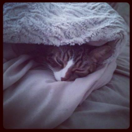 Cuddle Kitteh