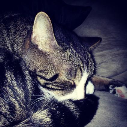 Sleepy Kitteh