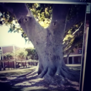 Creepy Tree