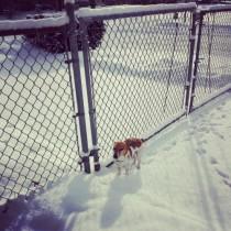 Snow Spike